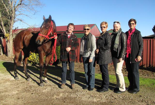 I-bought-a-racehorse-10web