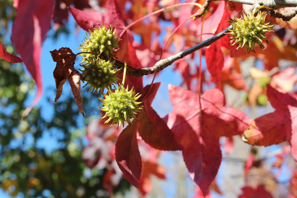 Wandiligong Autumn