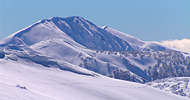 snow-feathertop