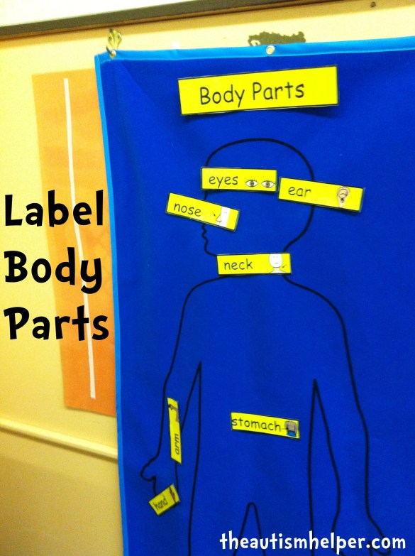 label body parts