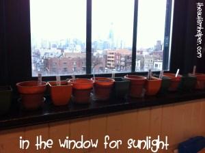 planting - The Autism Helper