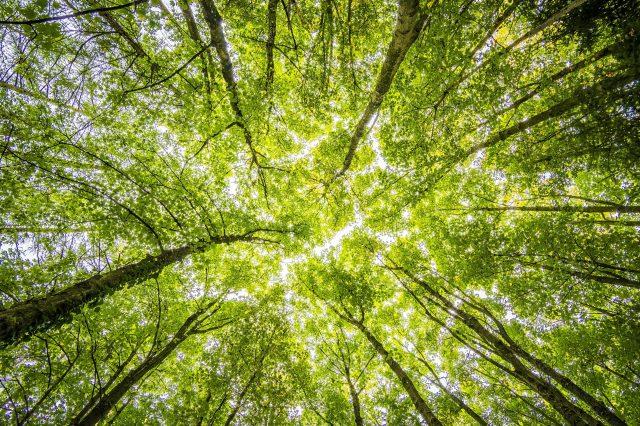 plot xgboost trees in r