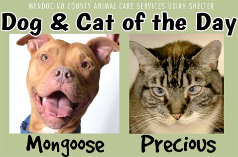 Mongoose&Precious