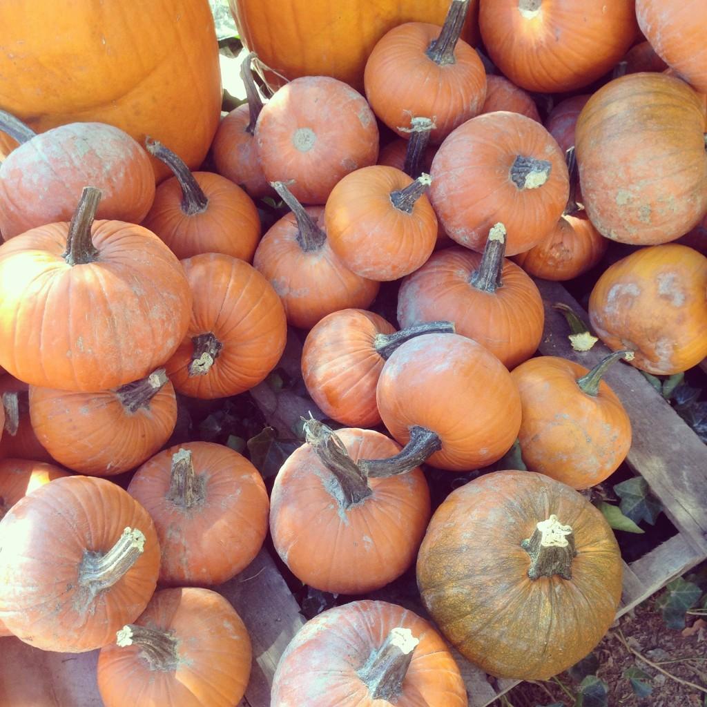 Standard Pumpkins...