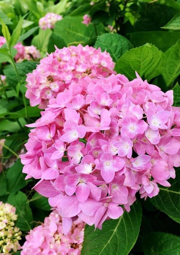 Herbs, Flowers & More | Daniel Stowe Botanical Gardens
