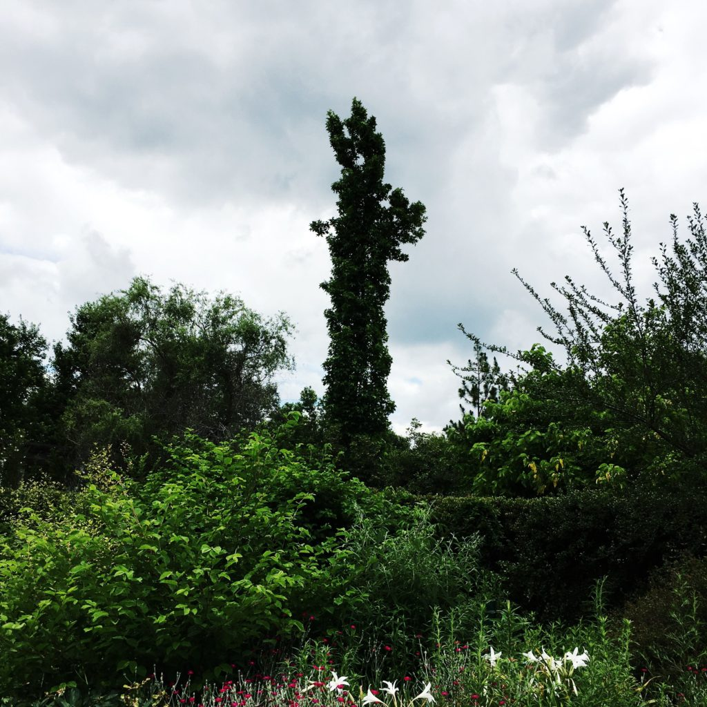 What do you think this tree looks like?