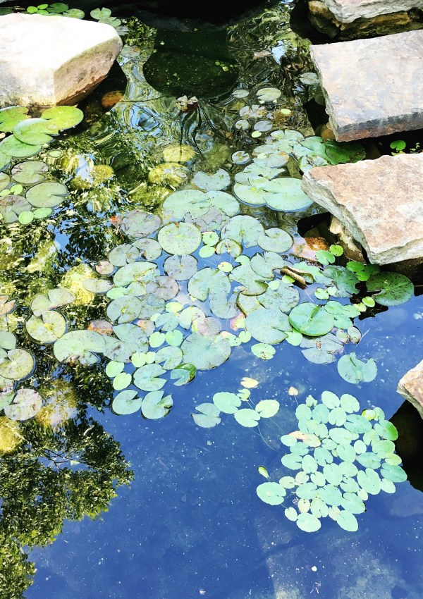 Charlotte's in Bloom | Mint Museum Garden Tour