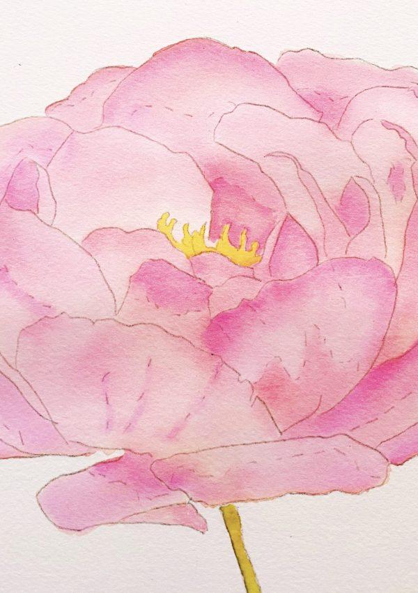 Weekend Painting | Pink Peony