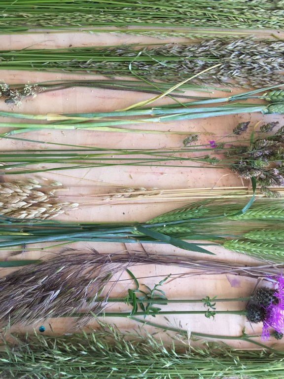 the different wild grasses of junes hedgerows- how to make a flower chandelier