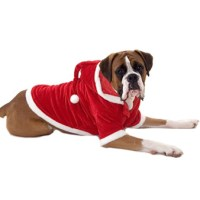 38 Cute Images Of Animals Dressed For The Holidays