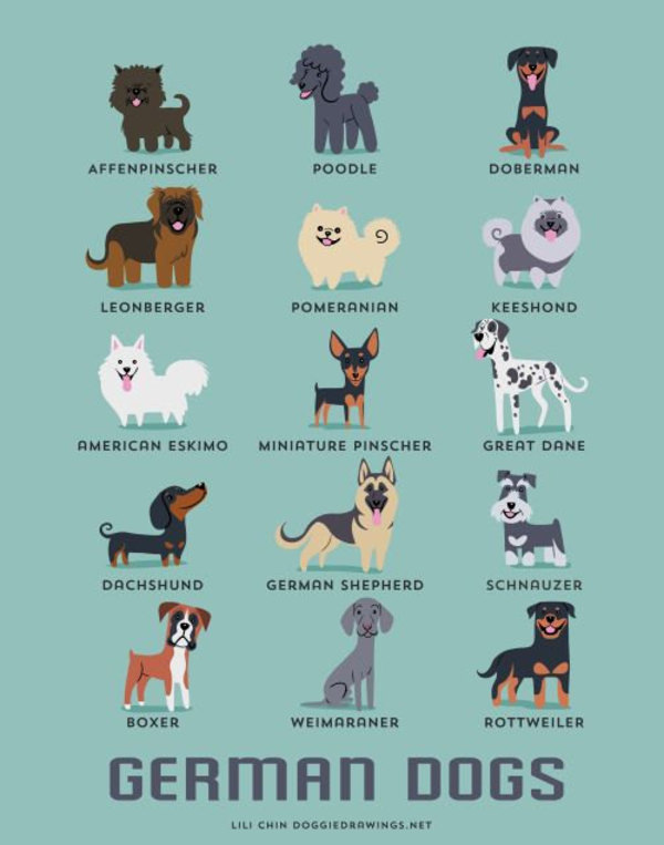 information about dogs - german  dogs