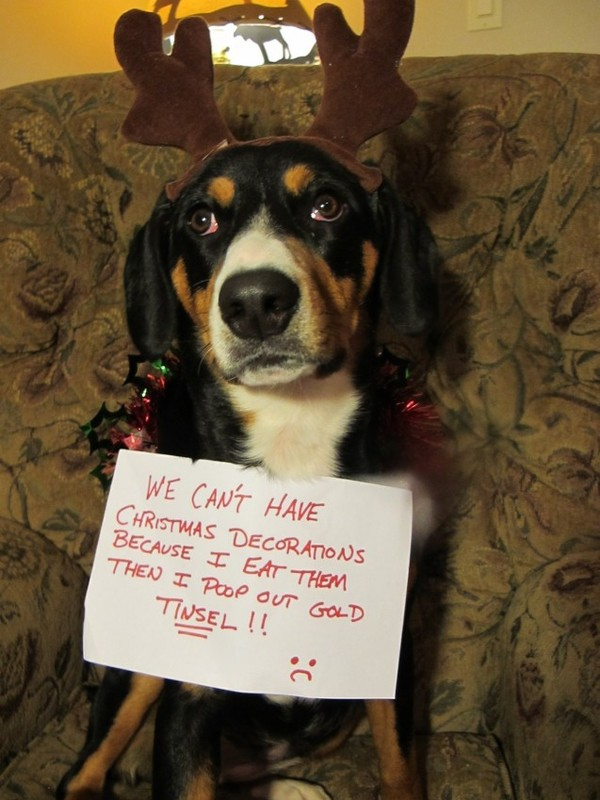 animals who ruined christmas