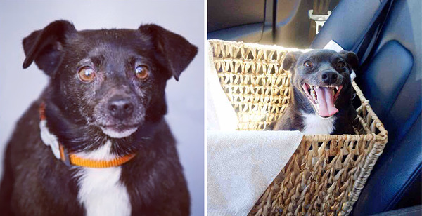 before and after adoption photos