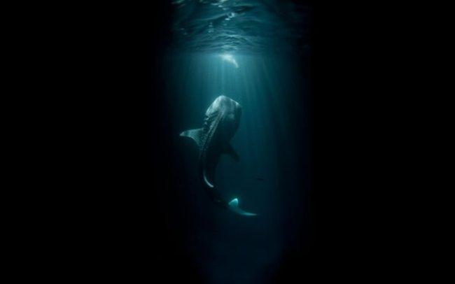 do you fear the sea? 11