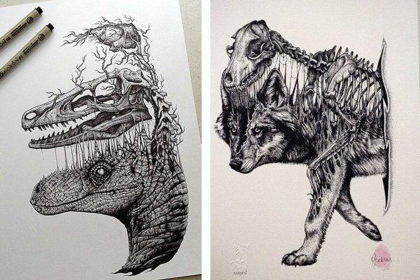 Stunning Drawings Of Animal Skeletons Paul Jackson