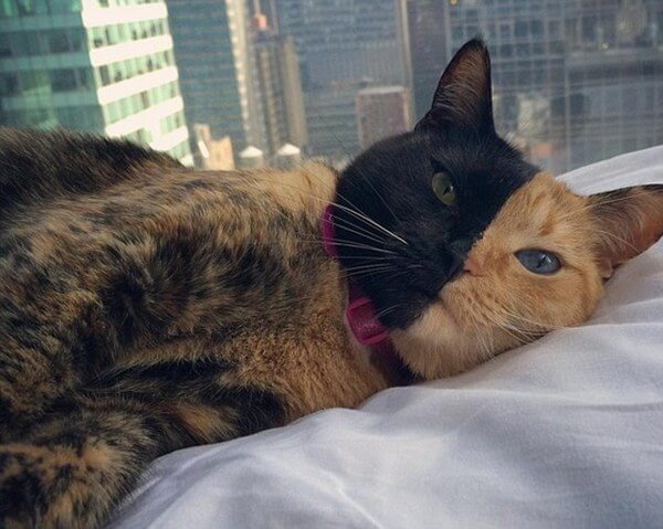 Venus The Two Faced Cat Is Breaking The Internet For Real