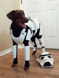 Dog Dressed As a Stormtrooper Has The Best Animal Costume