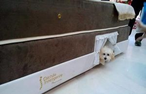 pet beds for dogs 2