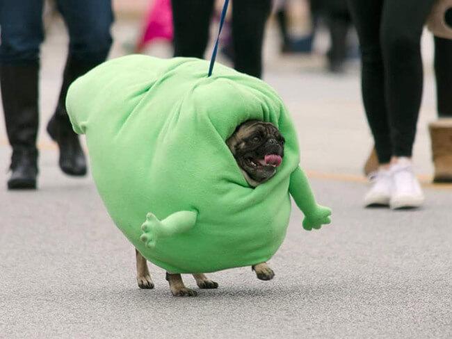 costume 3