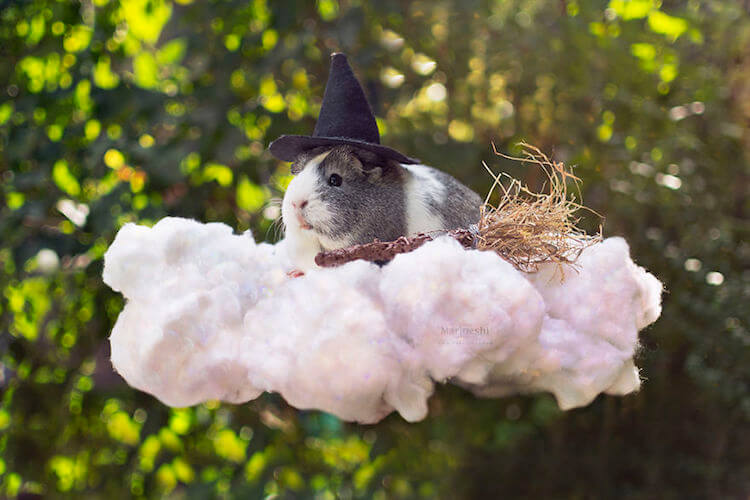 Magical Guinea Pig Pictures That Are Adorable And Gothic