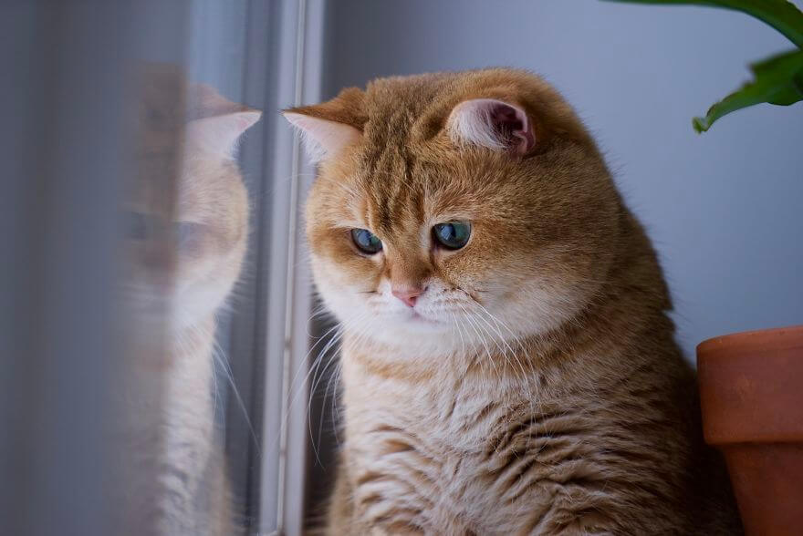 Cute And Adorable Wallpapers 41 Pictures Of The Hosico Cat Proving Once And For All