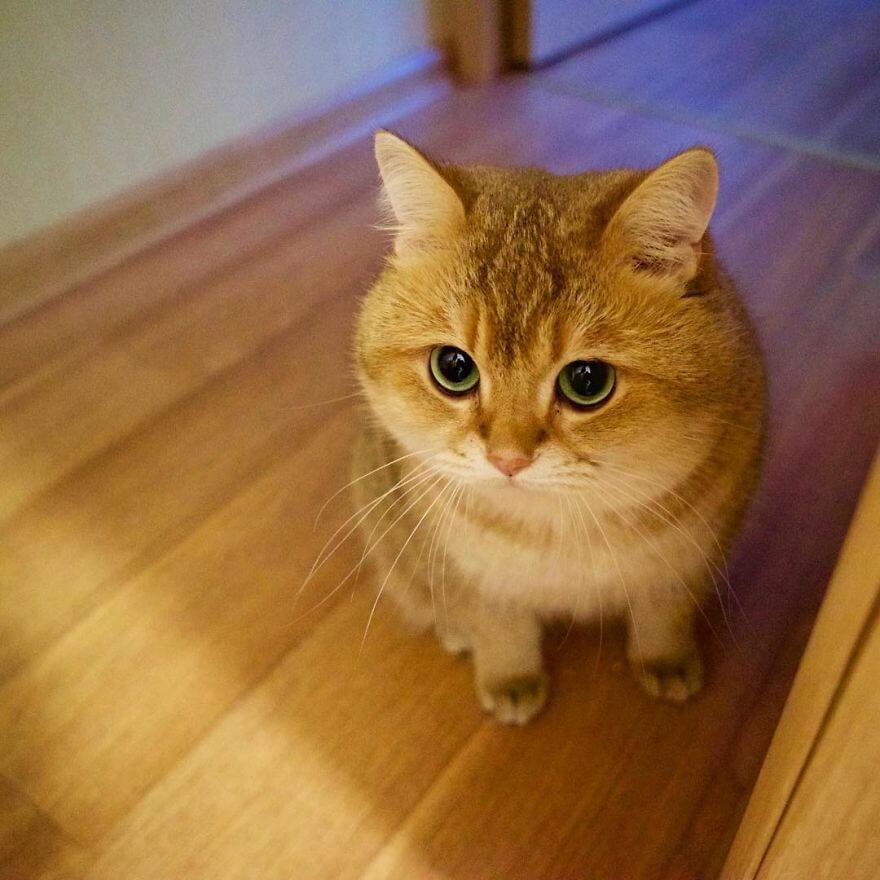 Cute Baby Dog Wallpaper 41 Pictures Of The Hosico Cat Proving Once And For All