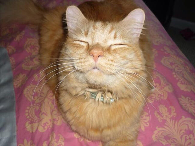 smiling kittens 14