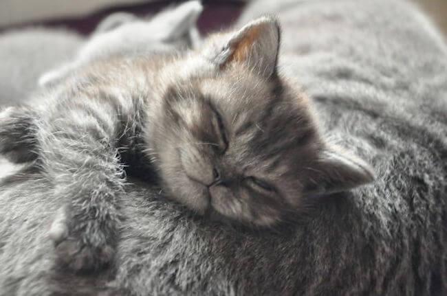 smiling kittens 17