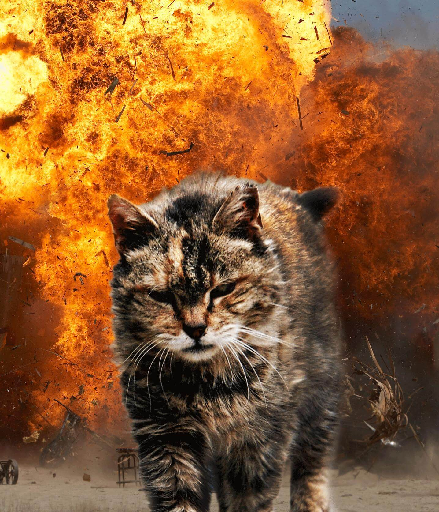 20 Cats Walking Away From Explosions As a Parody To Cool Guys Dont Look At Explosions