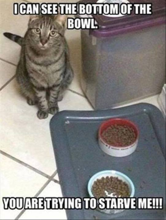 20 Cat Logic Memes Only Cat Owners Will Understand And Laugh With Tears In  Their Eyes