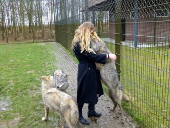 wolves wolf cute heart ferocious scary animals most reddit why melt source smooch go
