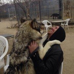 wolf cute heart melt instagram source