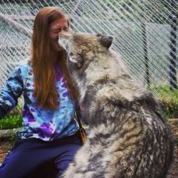 wolves wolf cute heart ferocious animals most why scary melt reasons adorable instagram source murder