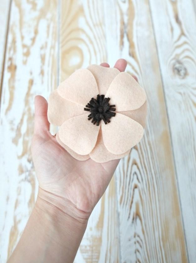 anemone-ready-fetr