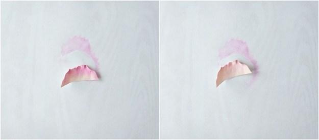 petals-color-collage1