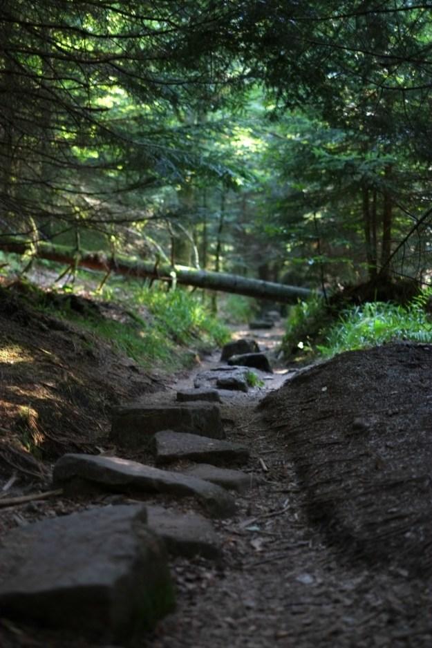 baden-forest5