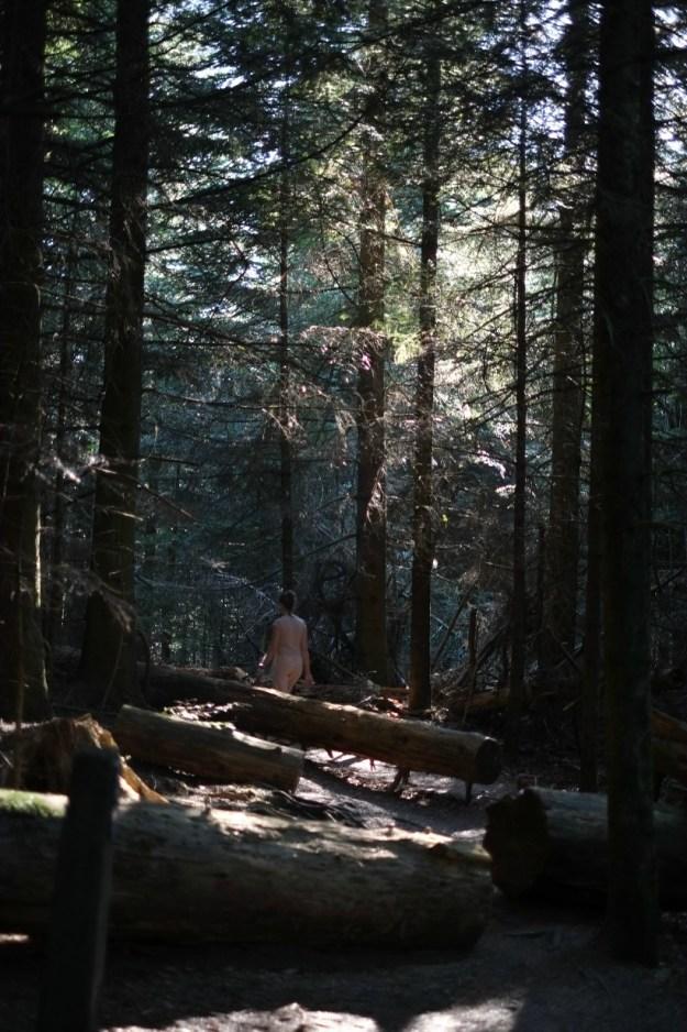baden-forest6