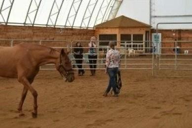 horses in round pen