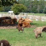 Homesteading: An Introduction to Homesteading