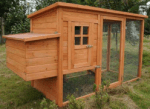 Medium Size Chicken Coop