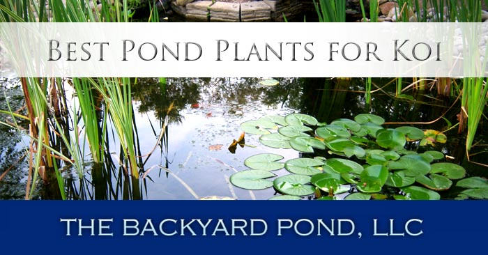 Backyard Pond Plants