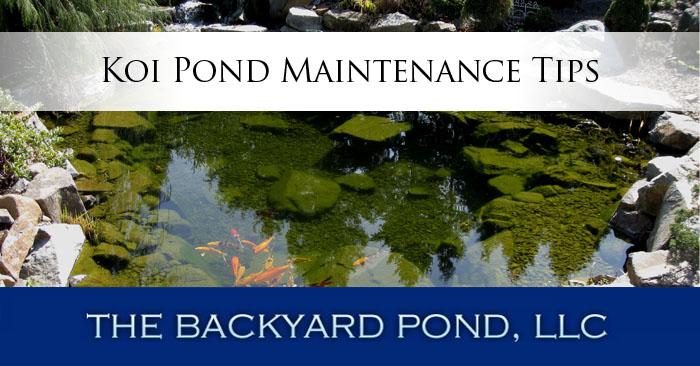 Backyard Pond Fish Sale