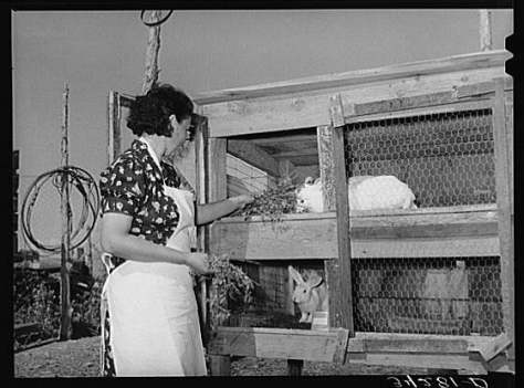 a vintage photo of farm wife tending to her rabbit hutch