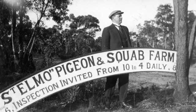 Photo credit: Blue Mountains Local Studiesraising backyard pigeons for meat vintage photo of squab farm sign