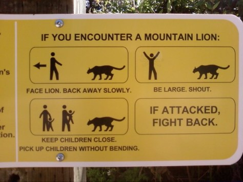 Sign Depicting What To Do When Encountering a Mountain Lion. Backyard Wildlife
