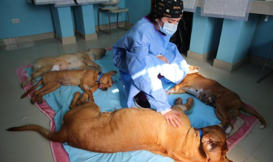 Beneficia a mas de dos mil mascotas la Clínica Veterinaria Gratuita de Tijuana: ARturo González Cruz