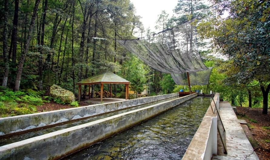 Siete transiciones ambientales que cambiarán el rumbo de Mexico en materia ambiental