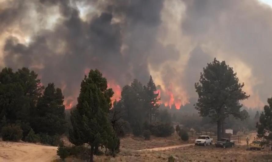 Afecta incendio forestal de Sierra de Juarez a más de mil hectáreas de arbustos y bosques