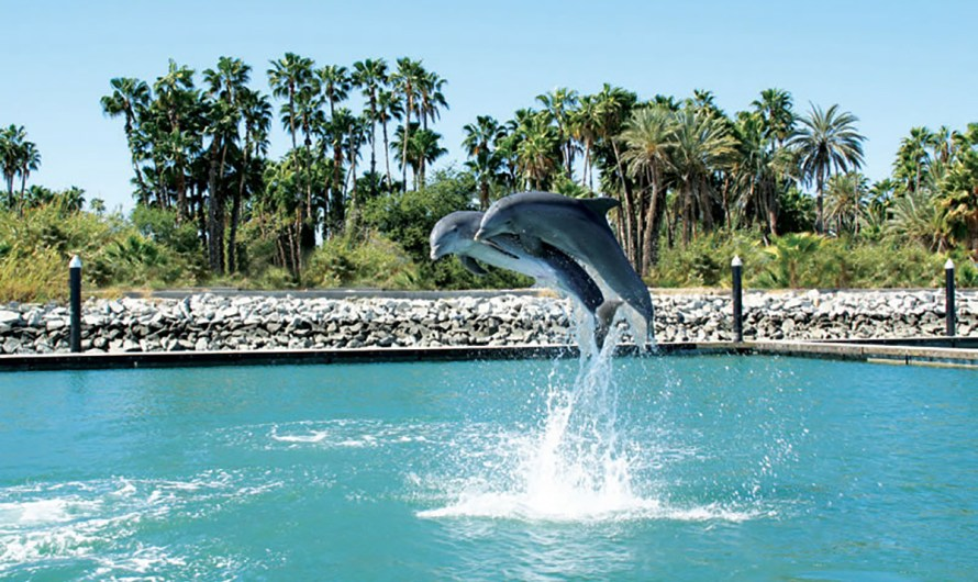 Dolphin Discovery in Los Cabos, 10 years of a unique recreation and educational experience