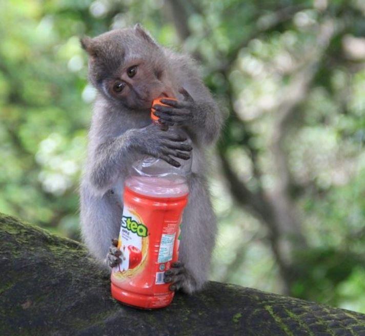 monkey at bali zoo